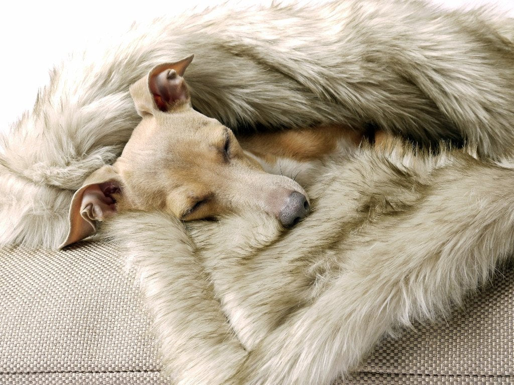 Charley Chau Faux-Fur Dog Blanket in Oatmeal