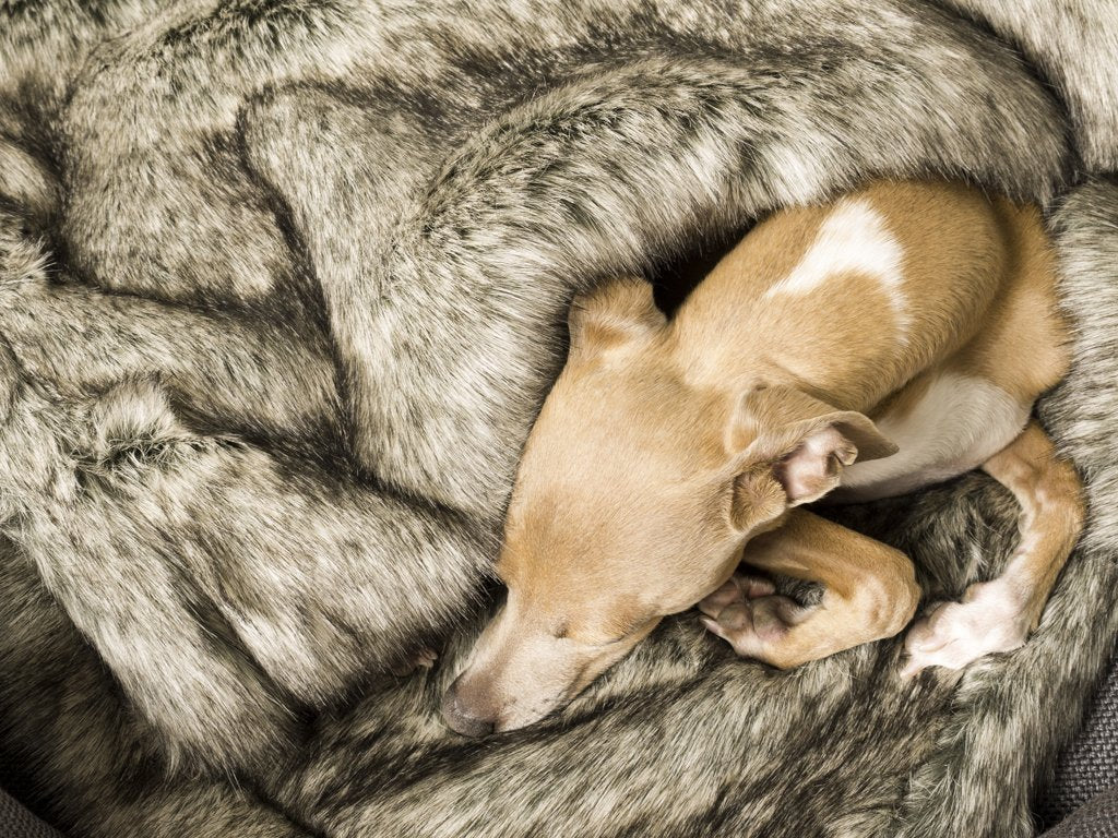 Charley Chau Faux-Fur Dog Blanket in Wolf Grey