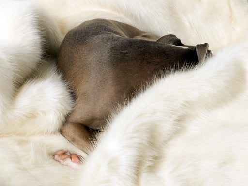 Charley Chau Faux-Fur Blanket in Polar Bear