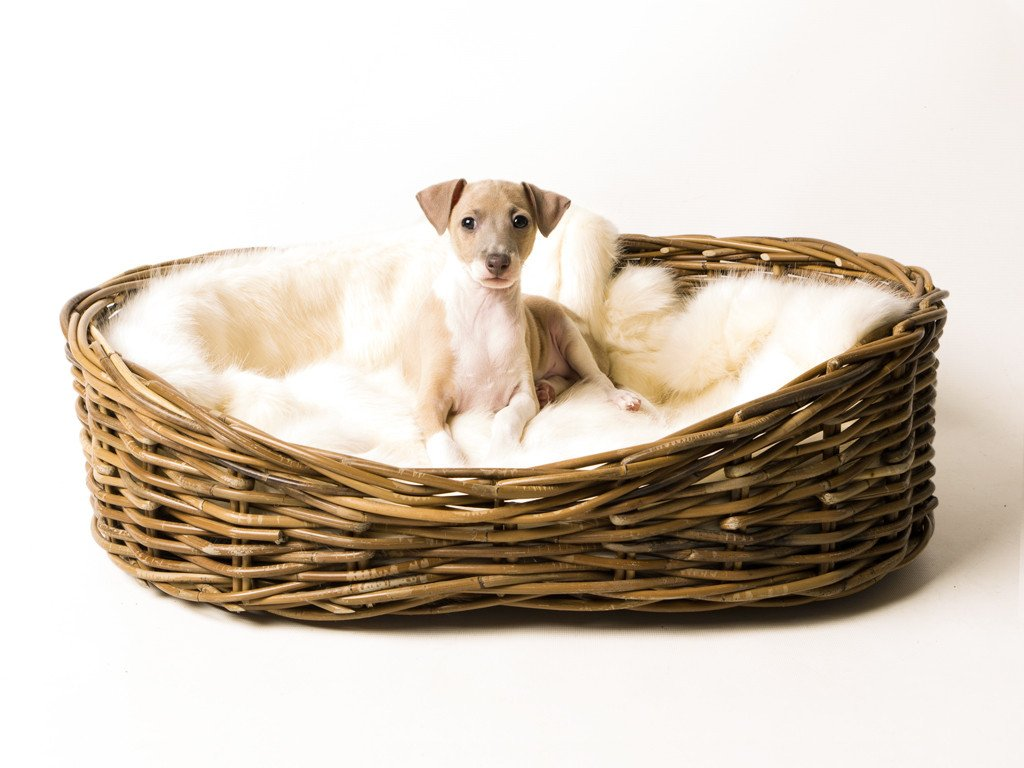 Luxe-up your dog's dog bed with Charley chau's Faux-Fur Blanket in Polar Bear