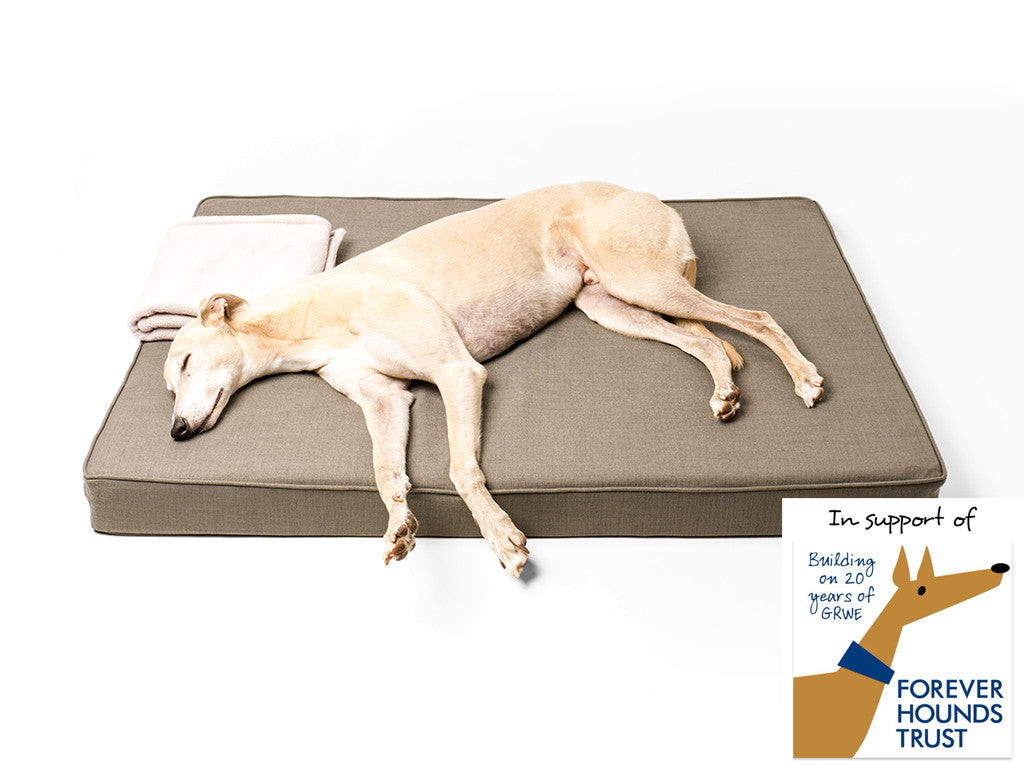 The Forever Hounds Trust Big Memory Foam Dog Bed in Earth