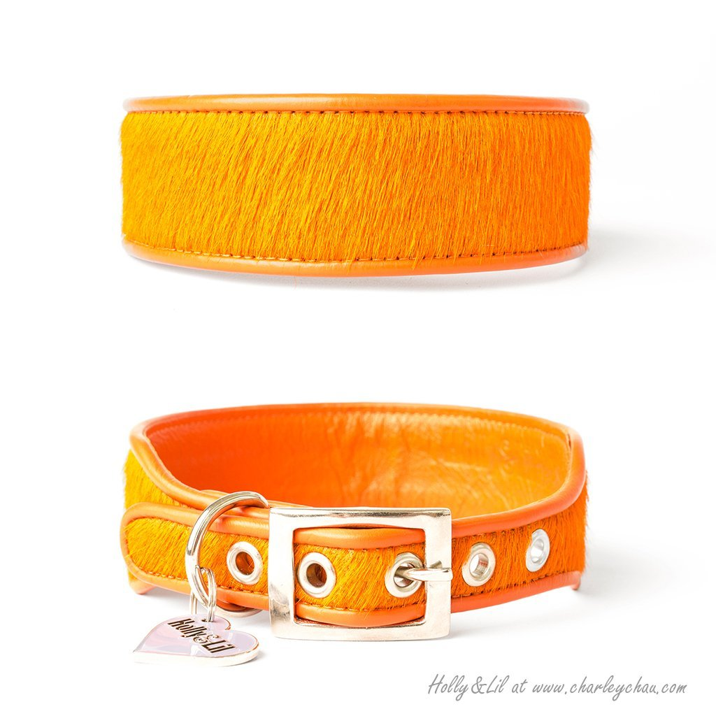 Brightside Sighthound Collars by Holly&Lil - for Italian Greyhounds, Whippets, Greyhounds, Lurchers and other Sighthound Dog Breeds