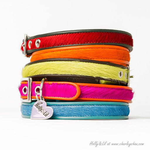 Brightside Slim Dog Collars by Holly&Lil