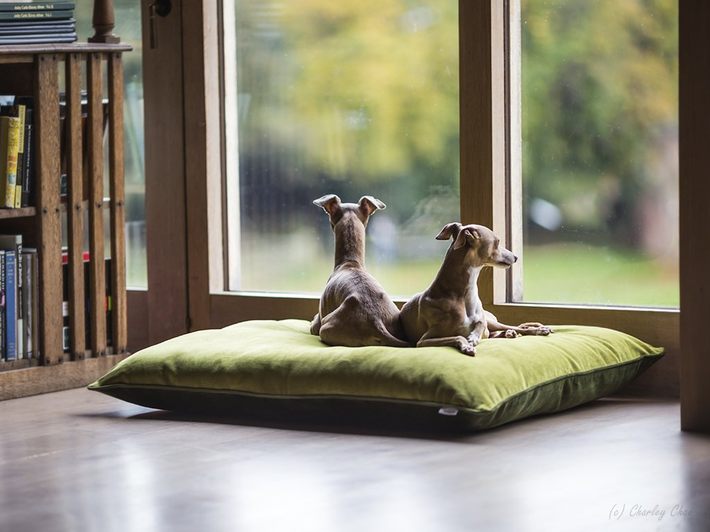 Charley Chau luxury dog bed mattress
