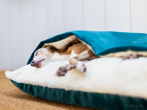 Charley Chau Snuggle Bed in Velour Teal