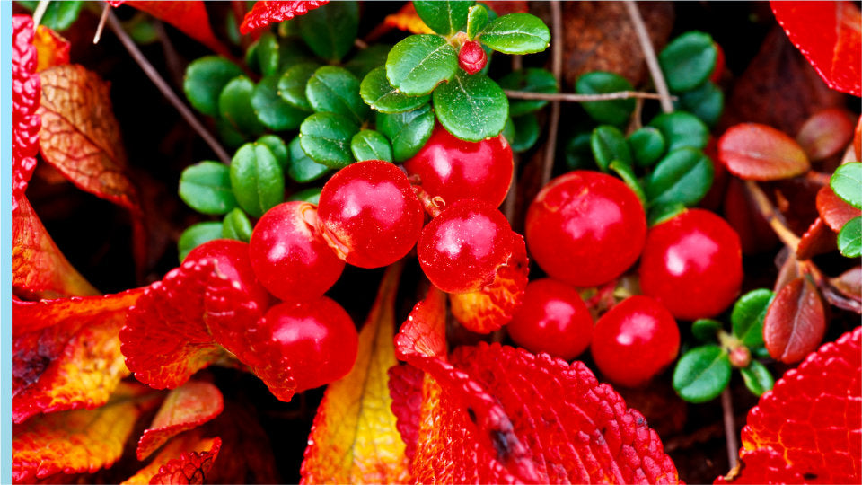Bearberry is a natural form of arbutin, which blocks brown spot production