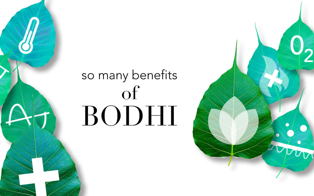 So Many Benefits of Bodhi- By ANJALI MD Skincare