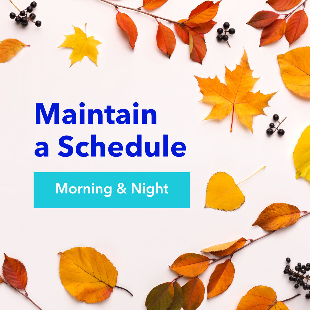 Text on a Leafy Background: Maintain a Schedule Morning and Night