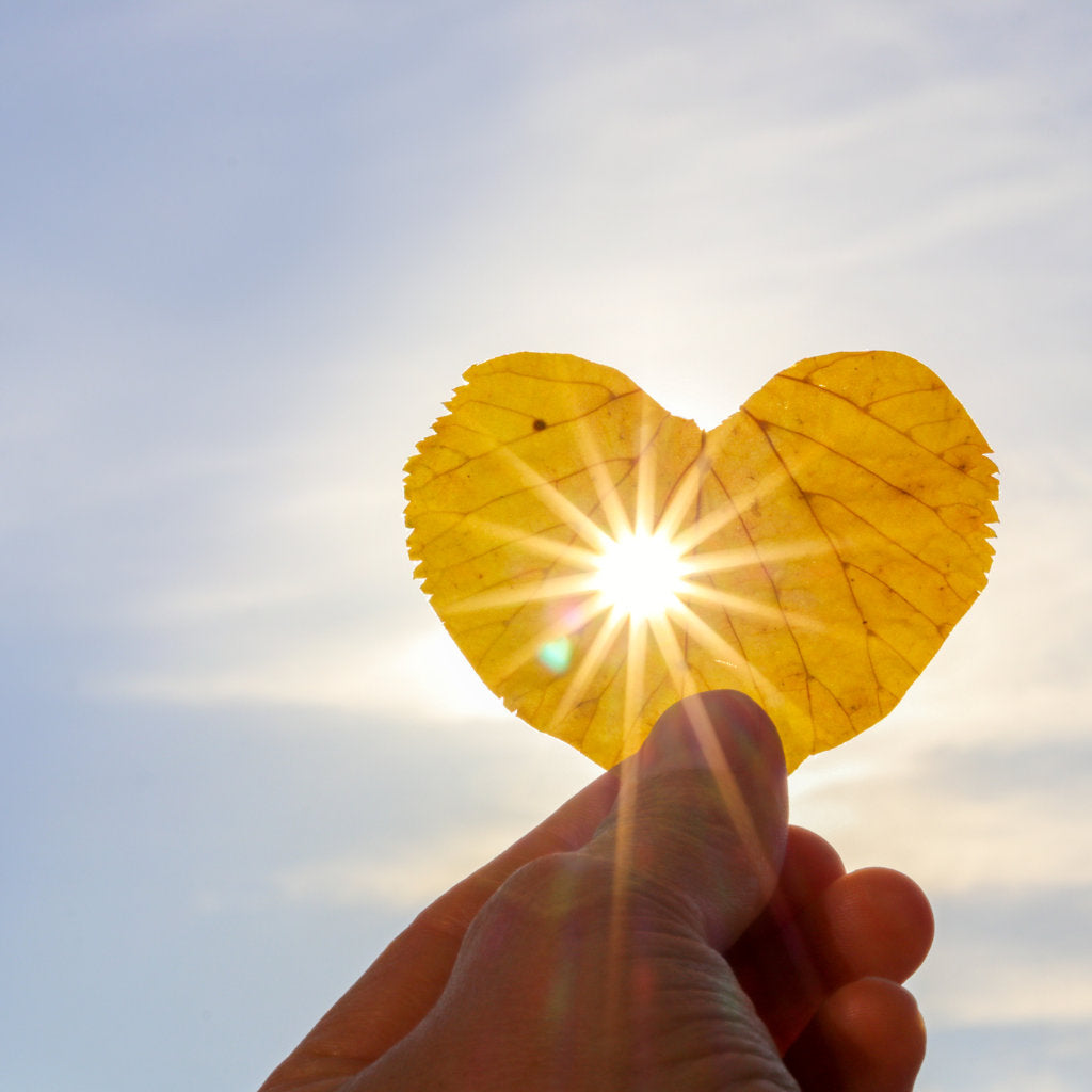 Hand holding a leaf up to the sun