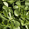 We use the ingredient Purslane in ANJALI MD Skincare Eye Wrinkle System