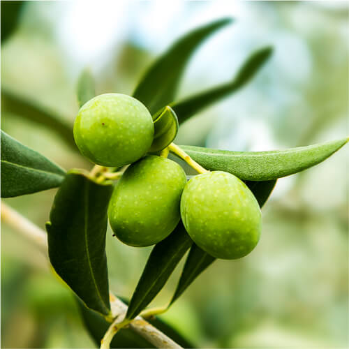 We use the ingredient Olive in ANJALI MD Skincare Laser Eye Lift