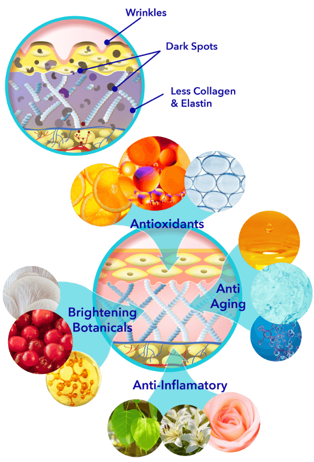 How the Ingredients Work - Skin Diagram shows skin conditions, wrinkles and dark pigment. After image shows multiple ingredients working on the skin cell as antioxidants, brightening botanicals and anti-inflamatory.