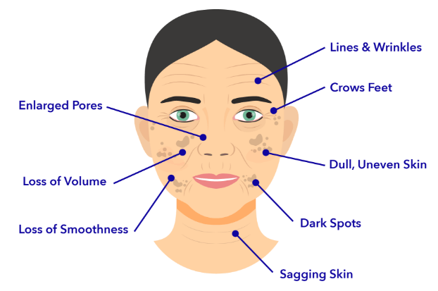 Competitors Scientific Study of the Skin