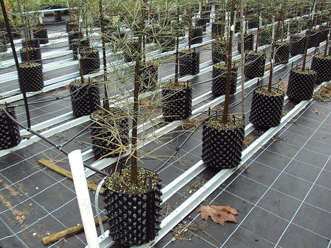 Trees in air root pruning pots