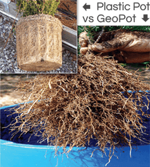 The healthy roots of a plant potted in a Geopot Fabric Pot are shown versus the unhealthy roots of a plant potted in a regular plastic pot