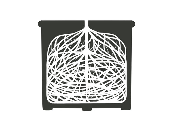 Diagram of root-bound roots in a plastic pot
