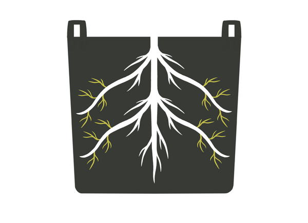 Diagram of air root pruning with feeder roots growing in a GeoPot fabric pot