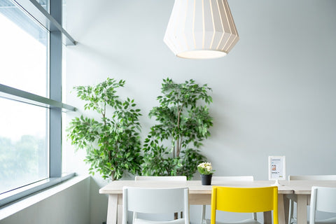 Indoor plants on a desk