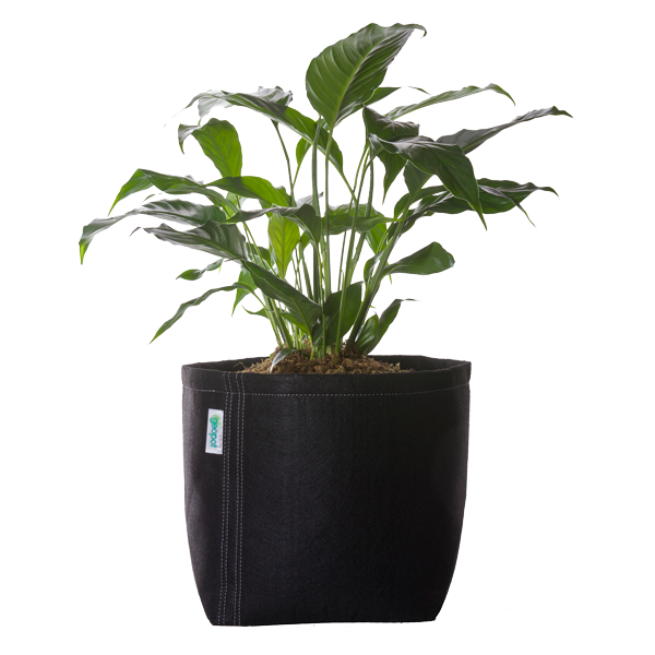 Black Square Bottom GeoPot - GeoPot Aerated Fabric Pots