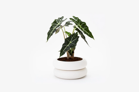 Stoneware Stacking Planter Short: 4 x 8 x 8 in DESIGNED BY CHEN CHEN AND KAI WILLIAMS