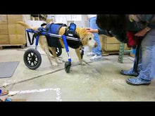 Load and play video in Gallery viewer, Adjustable Dog Wheelchairs