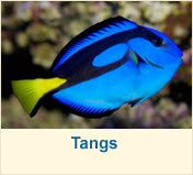 Load image into Gallery viewer, Saltwater Fish