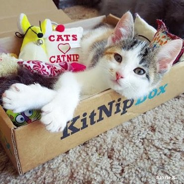 Kitnipbox - Month or monthly Cat Subscription Box of Cat Toys and Treats