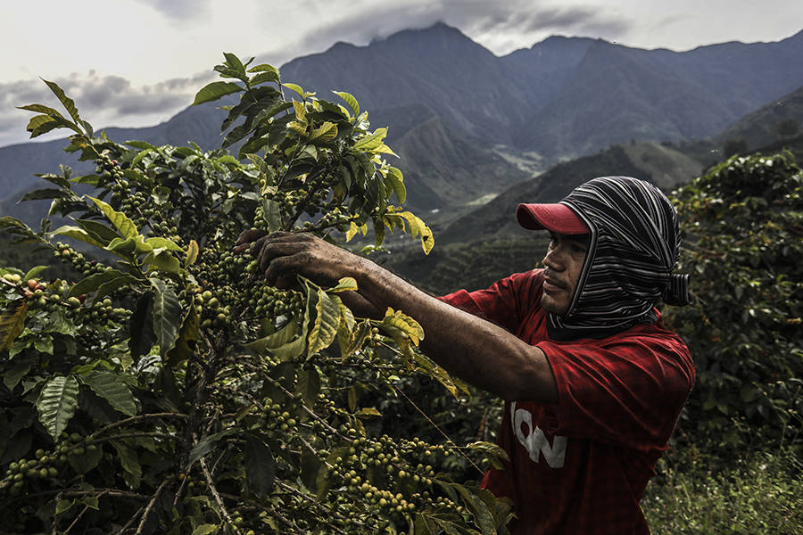Love Coffee? It's Another Reason to Care About Climate Change