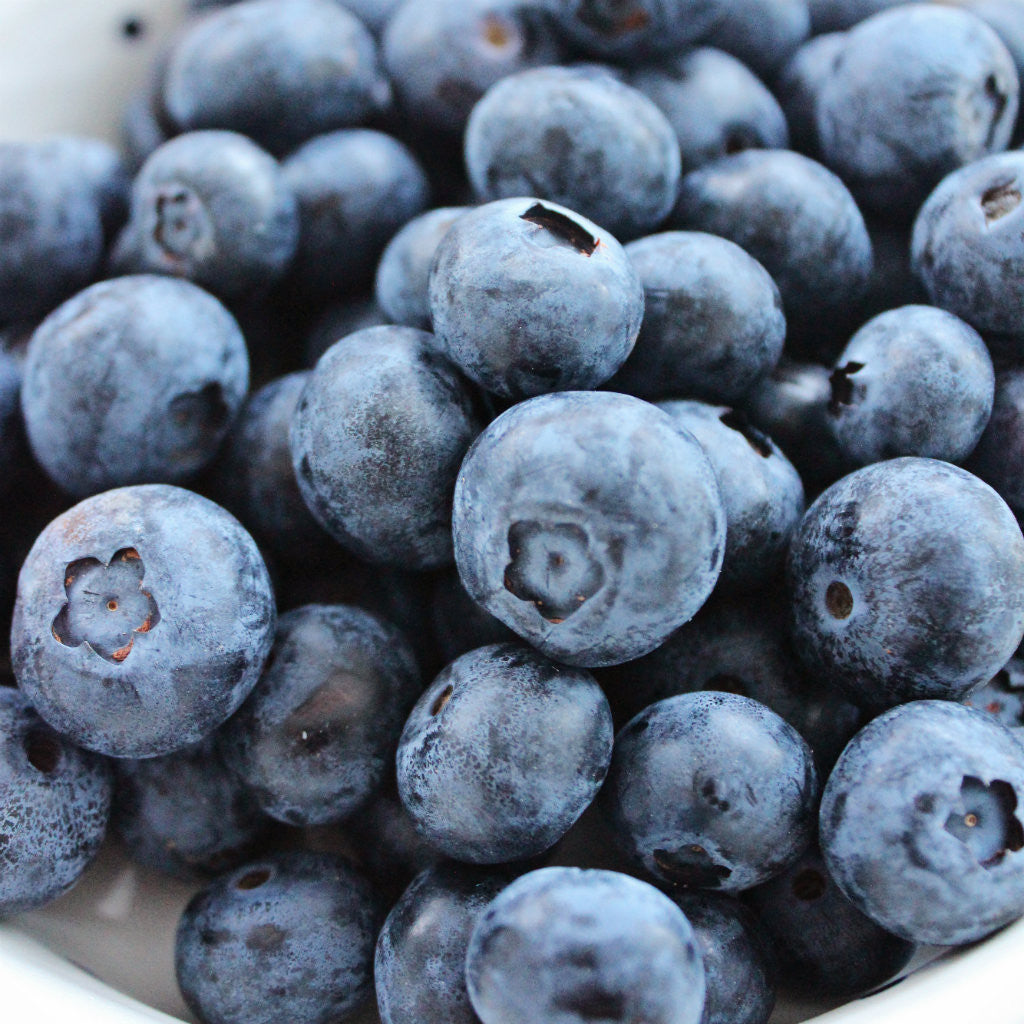 Fresh Blueberry - Best Place to get Blueberries