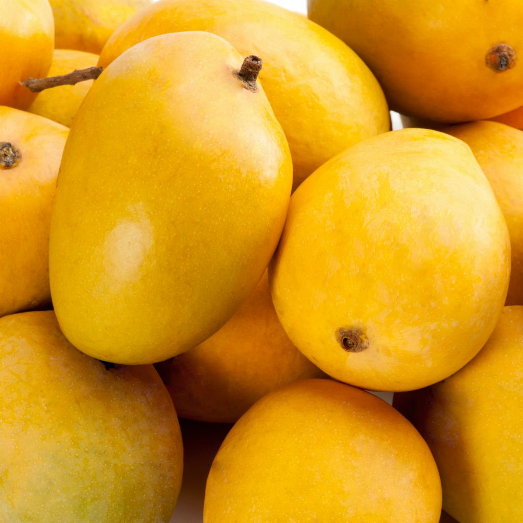 Coffee Beans Online >> Pick of the Week - Tablelands KP Mangoes | Harris Farm Markets