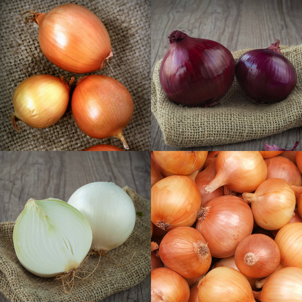 Onions: Pick of the Week