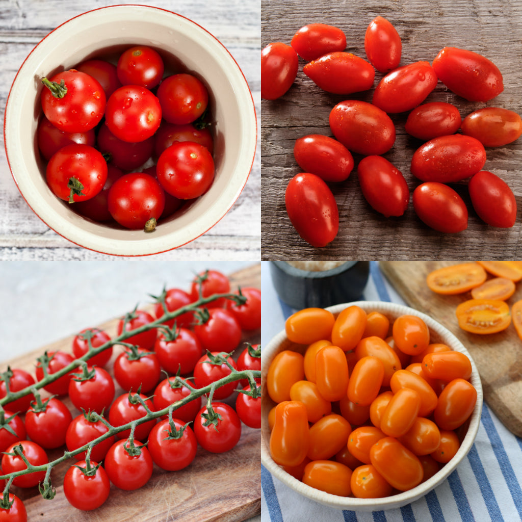 Dave's Pick of the Week - Snacking Toms