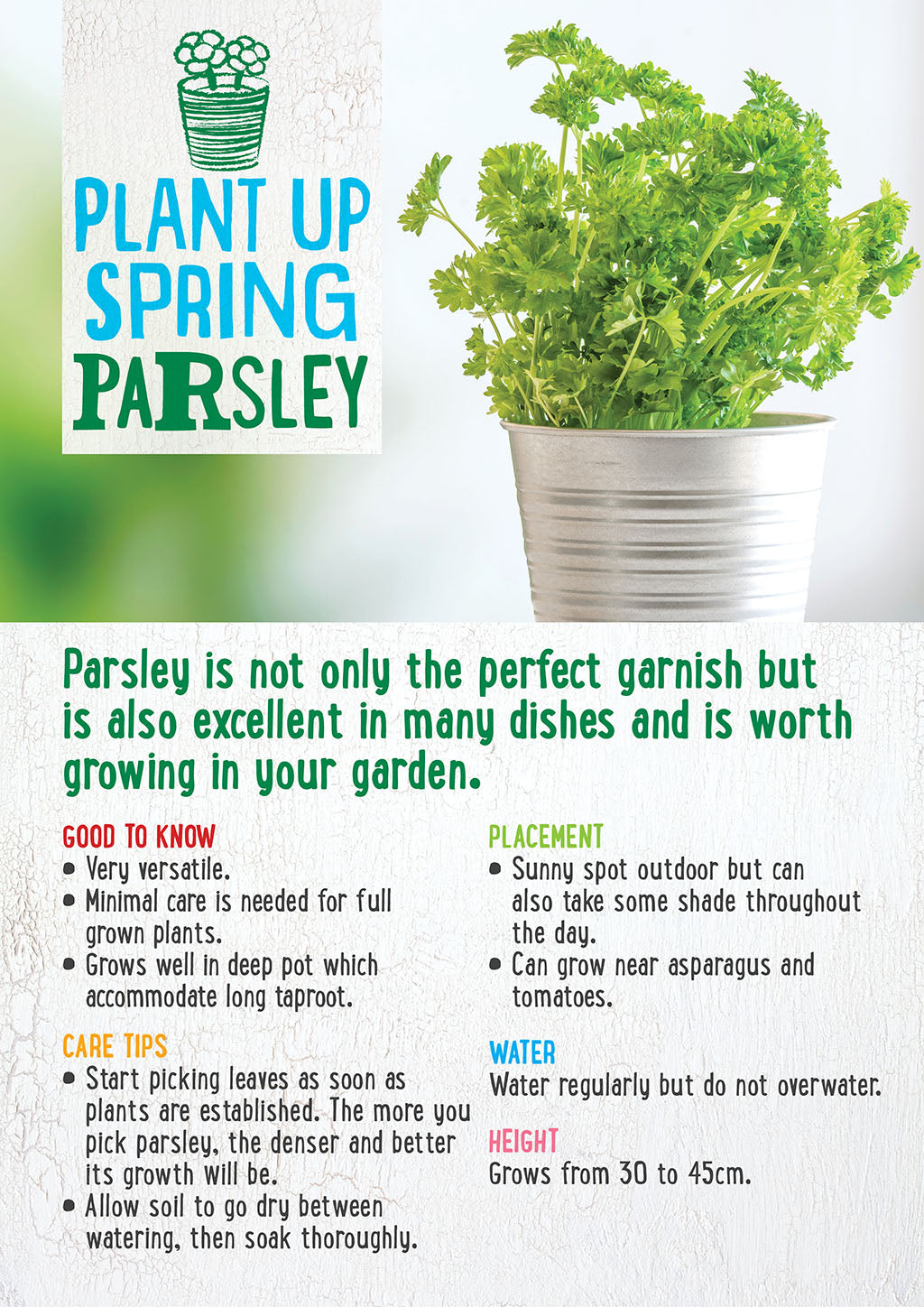 plant up spring parsley