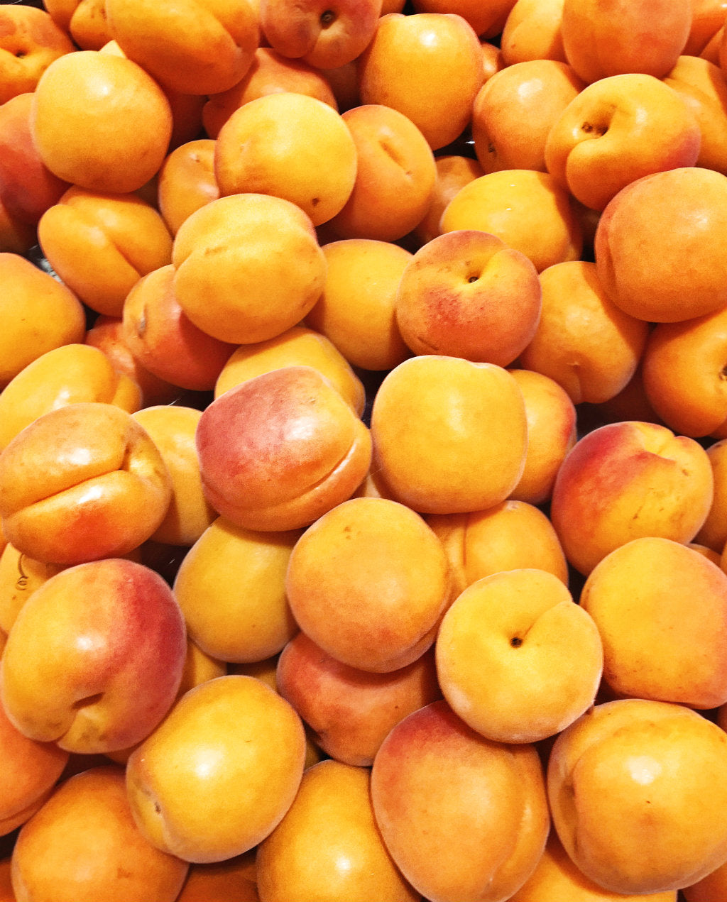 apricots pick of the week harris farm