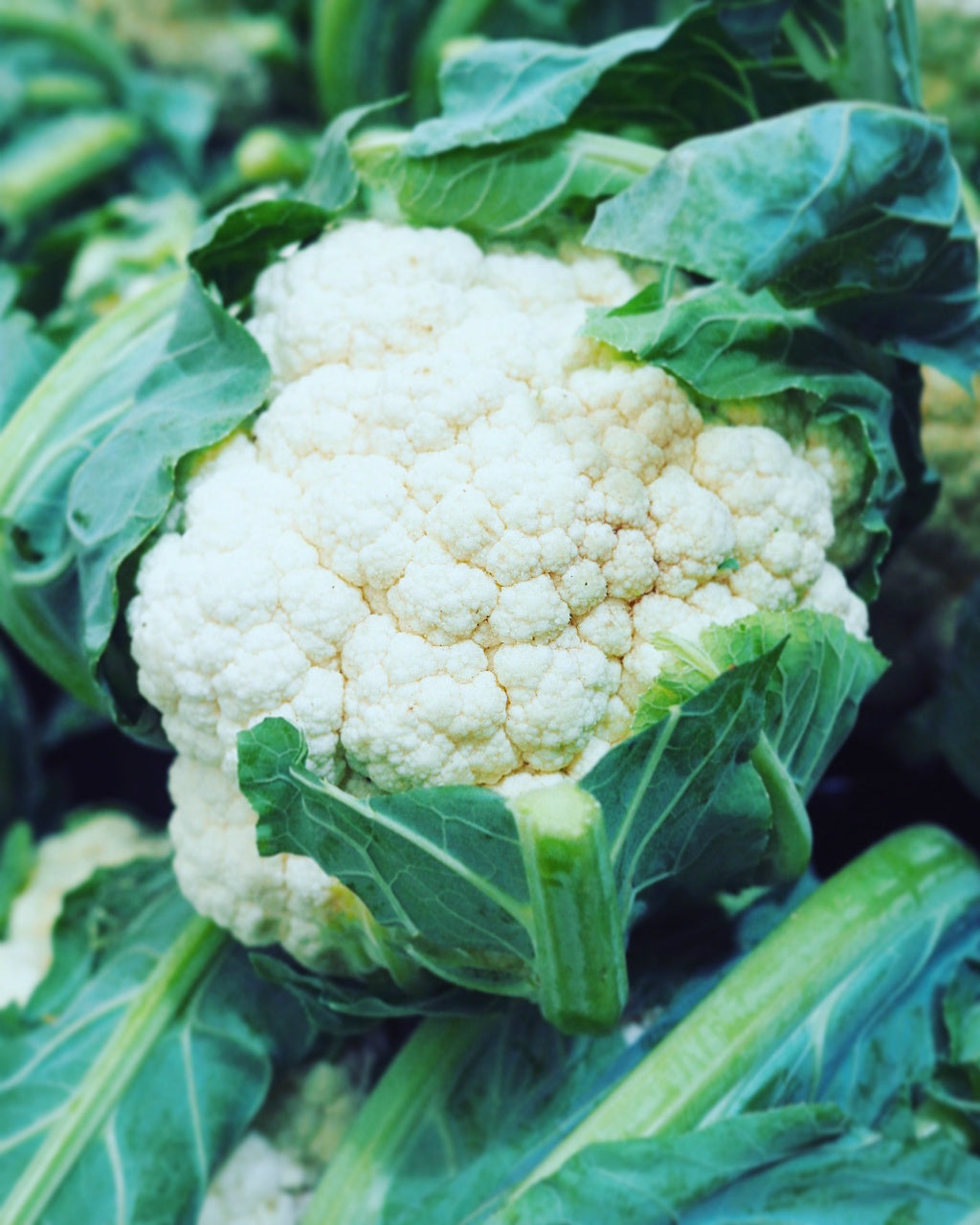 cauliflower pick of the week harris farm