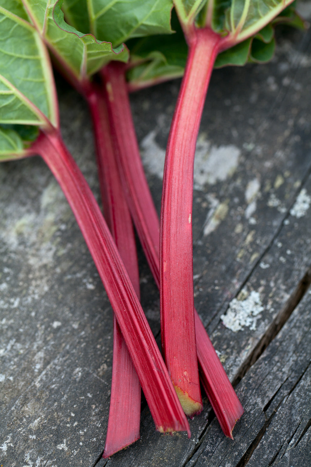 Rhubarb Pick of the Week