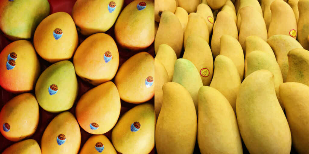 northern territory mangoes