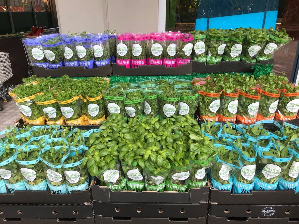 pick of the week - fresh potted herbs