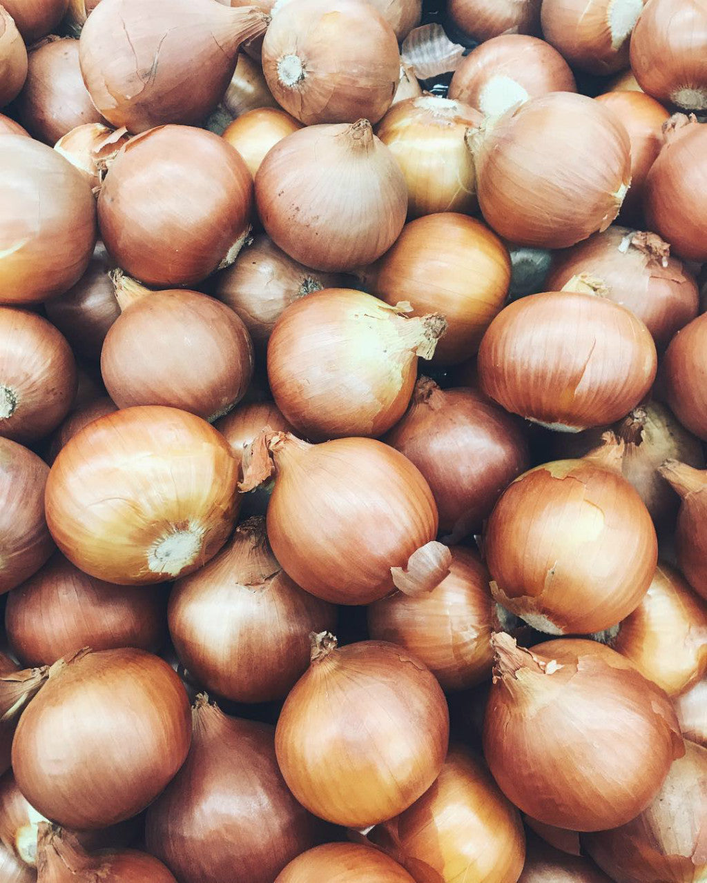 pick of the week brown onions harris farm