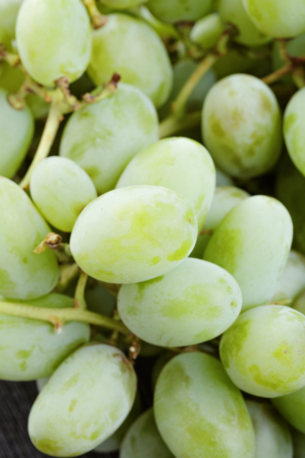 Pick of the Week - Thompson Seedless Grapes | Aussie White Grapes