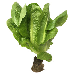 Lettuce Cos Baby (each)