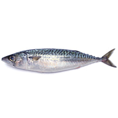 Fresh Blue Mackerel | Harris Farm Online