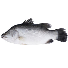 Barramundi Whole | Harris Farm Online