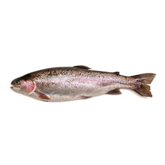 Fresh Rainbow Trout | Harris Farm Online