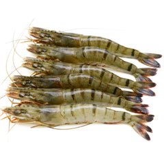 Ocean Tiger Prawns Large Raw | Harris Farm Online