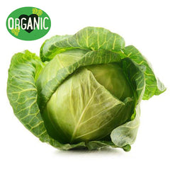 Fresh Cabbage Organic | Harris Farm Online