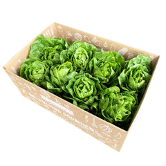 Lettuce Baby Cos Case | Harris Farm Online