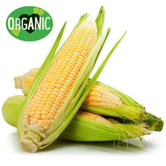 Corn Loose Organic (each)