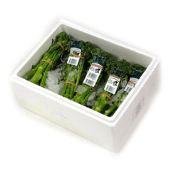 Broccolini (box 12) , Wholesale - HFM, Harris Farm Markets