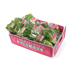 Lettuce Baby Cos Twin packs (box 10) , Wholesale - HFM, Harris Farm Markets